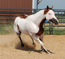 All My Horses Natures Best Creations
